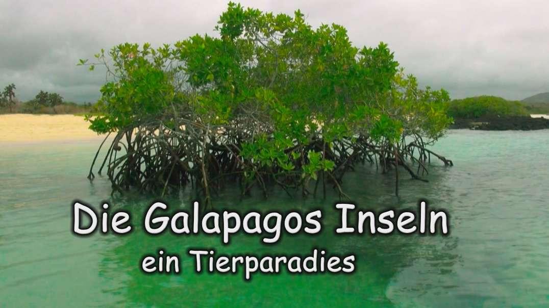 Die Galapagos Inseln ein Tierparadies
