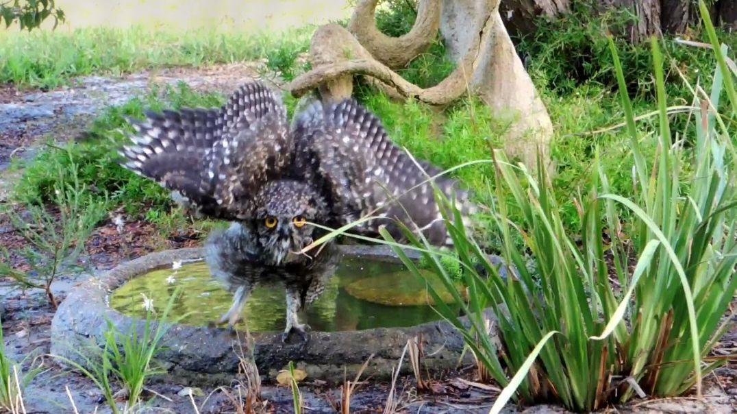 Owl-Hour